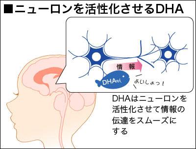 Vai trò của DHA đối với cơ thể