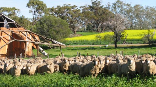 Xứ sở của các Loại len Lông Cừu